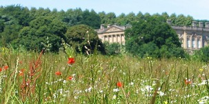 Flowering plants in grassland at Wentworth Castle
