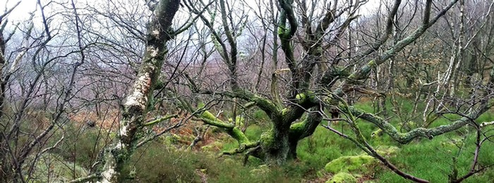 Woodland on Wharncliffe Crags